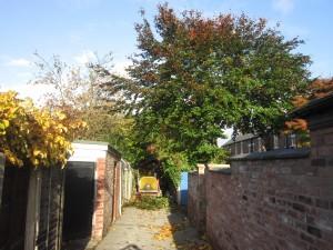 Tree-surgeon-Stockport-0795