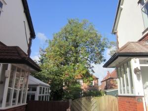 Tree-surgeon-Stockport-0800