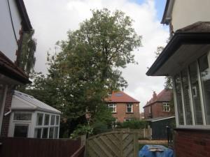 Tree-surgeon-Stockport-0803