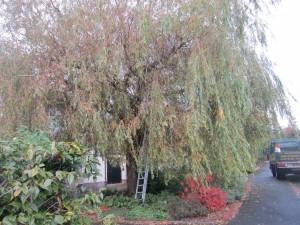 Tree-surgeon-Stockport-0807