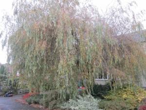 Tree-surgeon-Stockport-0809