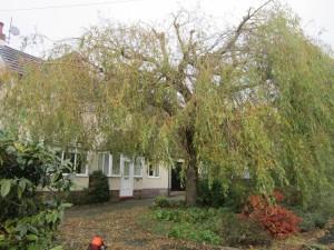 Tree-surgeon-Stockport-0811