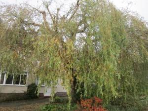 Tree-surgeon-Stockport-0812