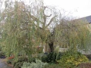 Tree-surgeon-Stockport-0814