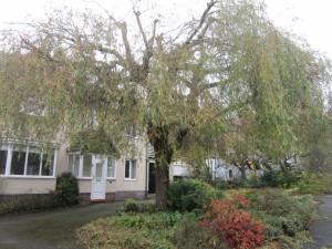 Tree-surgeon-Stockport-0816