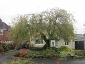 Tree-surgeon-Stockport-0818