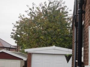 Tree-surgeon-Stockport-0821