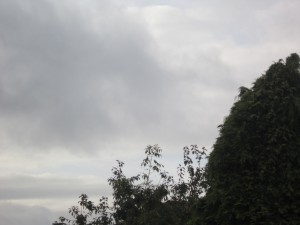 Tree-surgeon-Stockport-0824